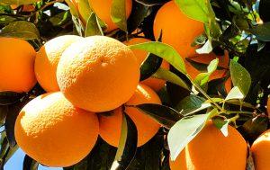 รายละเอียดโภชนาการสีส้มและข้อดีของความเป็นอยู่ที่ดี